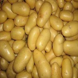 Yellow Potato, Packaging: Net Bag