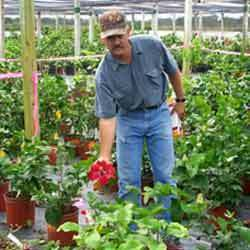 Horticulture services in jaipur horticulture plant maintenance solutioingenieria Images