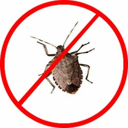stink bug extermination