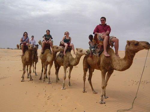 Camel Safari Tour In Rajasthan