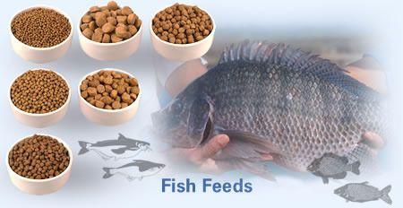 Ornamental Fish Feed