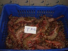 Fresh/Chilled Black Tiger Shrimp - Kareem Seafoods, Mumbai