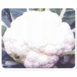 Asia White 65 Cauliflower Seed
