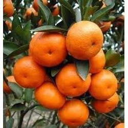Citrus Bioflavonoids Extract, Pack Size: 25 kg, Packaging Type: Drum
