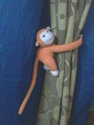 Curtain Monkey