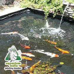Garden pond suppliers manufacturers traders in india for Koi pond maintenance near me