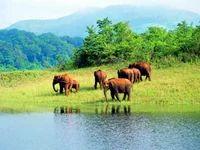 Wildlife Tour Service