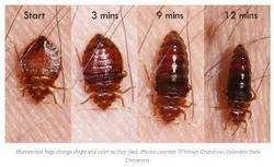 Bed Bugs Buster Service In West Jafferkhanpet Chennai Id 10478592612