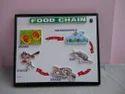 Food Chain Models