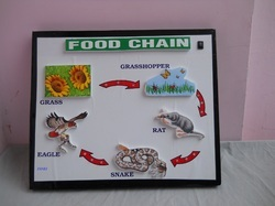 DDRI Food Chain Models