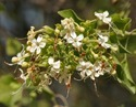 Arnimool Herbs
