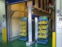 Banana Ripening Chamber Kela Ripening Chamber Suppliers