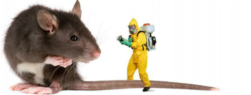 Image result for rodent pest control services