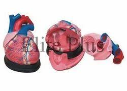 Jumbo Heart Models
