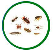 House Hold Pest Management Services