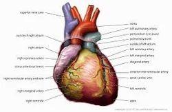 Heart Yoga Therapies