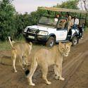 Luxury Wildlife Tours