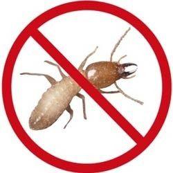 termite treatment thailand