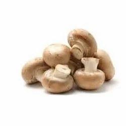 Mushroom - Exporters in India