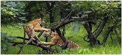 Wild Life Rajasthan, 8Nights / 9Days