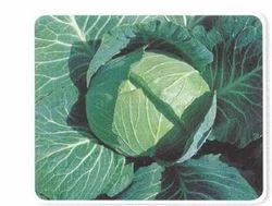 Arirang World Cabbage