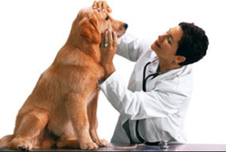 Pet Treatment