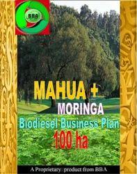 Mahua  Moringa Biodiesel Business Plan 100 ha