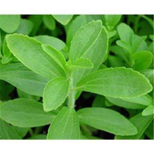 Natural Stevia Leaf, 100 Gm, Packaging Type: Box