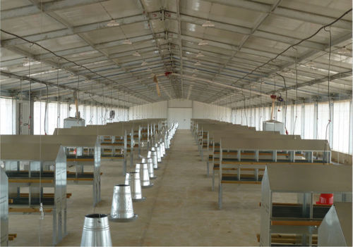 Steel Poultry Sheds Building Rs 140 Square Feet Kishore