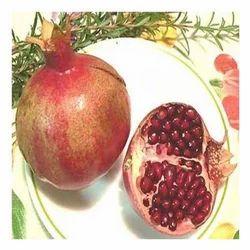 Punica Granatum Extract