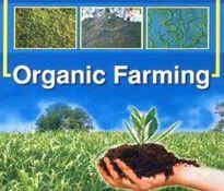 Classic Organic Chemicals