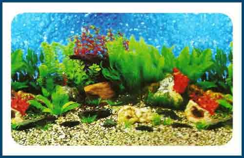 3d Aquarium Wallpaper View Specifications Details Of Aquarium
