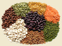 All Type of Spices