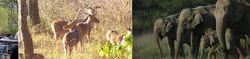 Rajaji National Park (2n / 3d) Tour