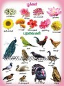 Flowers & Birds In Tamil Chart