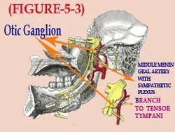 otic ganglion