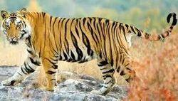 India Wildlife Tours Service