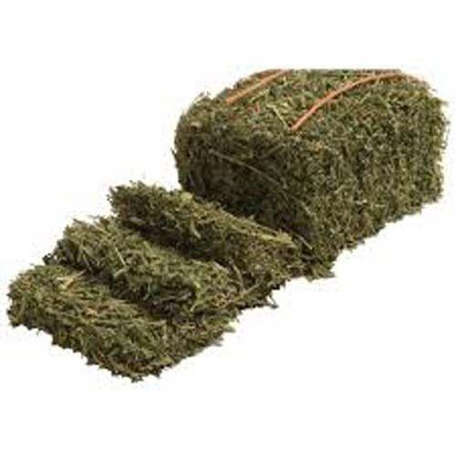 Alfalfa Hay at Best Price in India