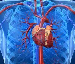 Cardiac Sciences