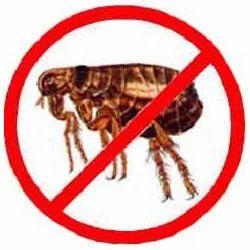 Fleas Control Services