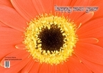 Greeting Cards Templates Printing Services