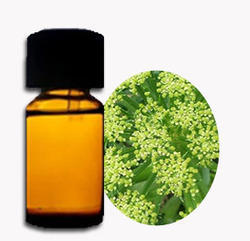 Angelica Archangelica Oil