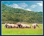 Wild Life Tours