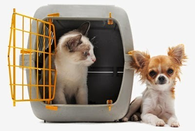 International Pet Relocation Services in Mahipalpur