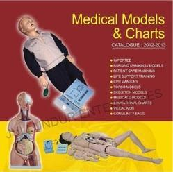 JE MEDIGUARD Human Anatomical Model