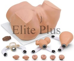 EVA Gynecology Training Manikin
