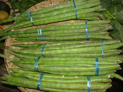 fresh vegetables fresh drumstick exporter from tiruppur. Black Bedroom Furniture Sets. Home Design Ideas