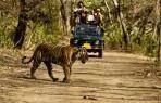 Jim Corbett Wildlife Tour