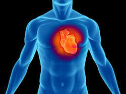 Cardiology Transcription Services