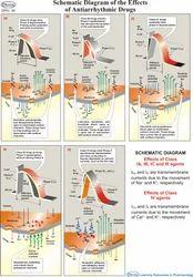 Pharmacy Charts